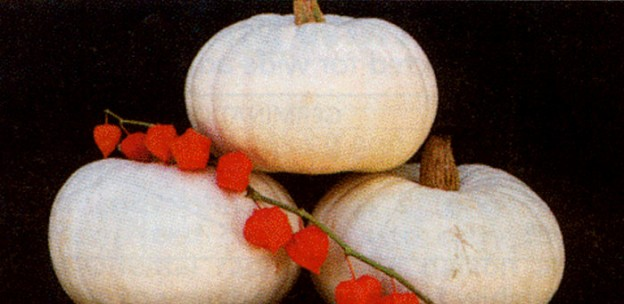 white-pumpkin-nutrition